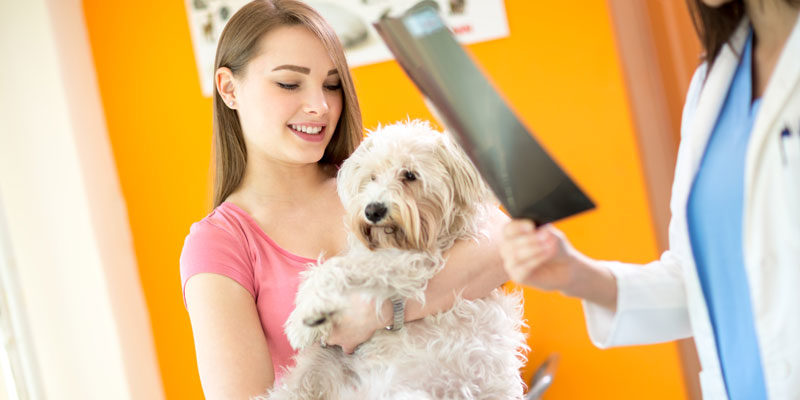 Why Your Pet Needs Timely Health Checkup?