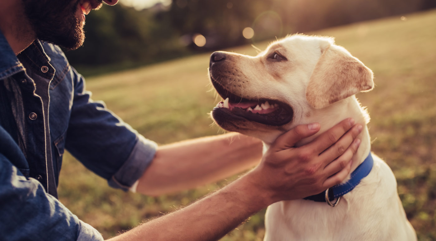 Keep Your Pets Calm with CBD Oil
