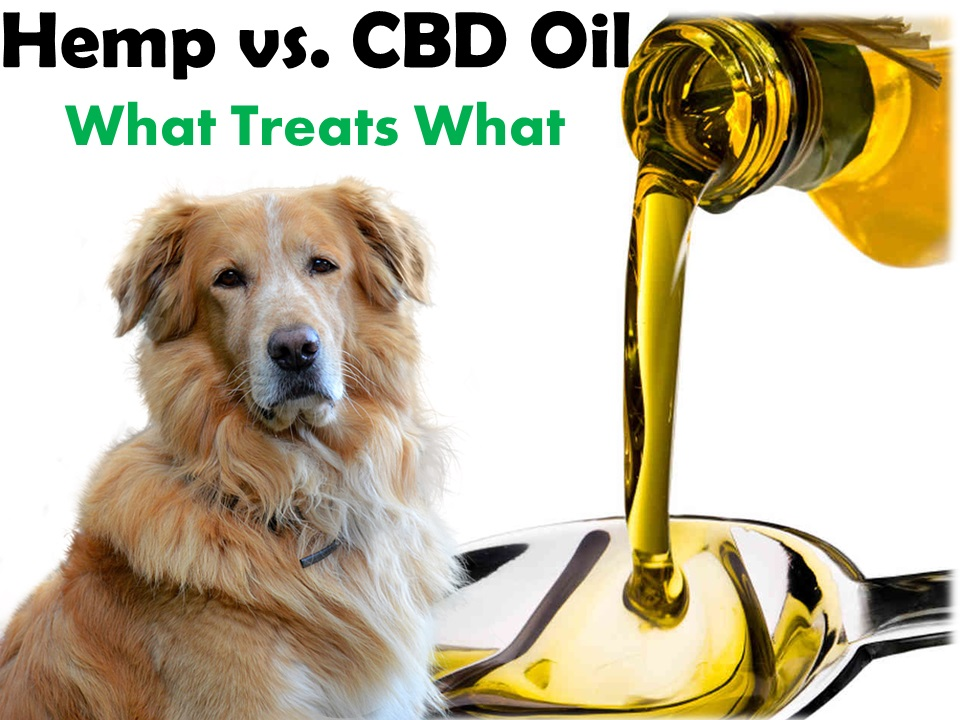 Gains from Giving Hemp CBD Oil to Dogs