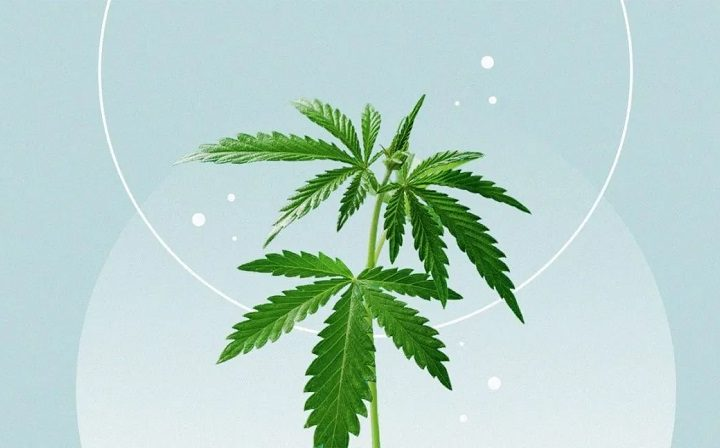 A Complete Guide for Buying CBD Oil Online
